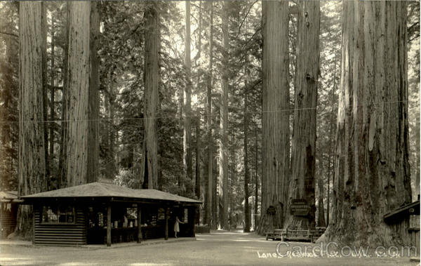 Lane's Redwood Flat Redwood Highway California Patterson