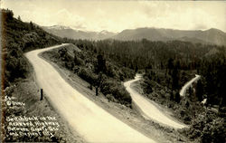 Switchback On The Redwood Highway