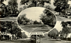 Petts Wood Postcard