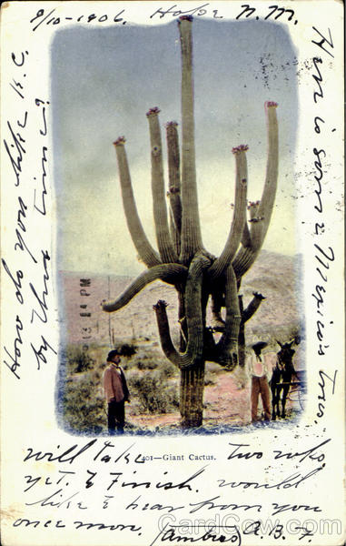 Giant Cactus Cowboy Western