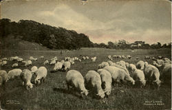 Sheep on golf links, Franklin Park