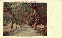 A California Pepper Drive