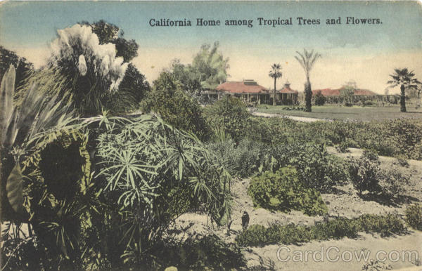 California Home among Tropical Trees and Flowers Scenic