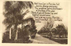 Florida Palm Trees, poem