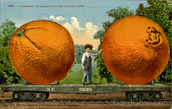 A Carload Of Mammoth Navel Oranges Exaggeration