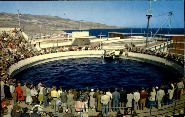 Porpoise Games Time Marineland Of The Pacific Los Angeles Ca