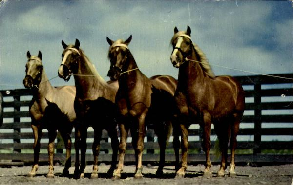 Blue Bloods Of Texas Horses