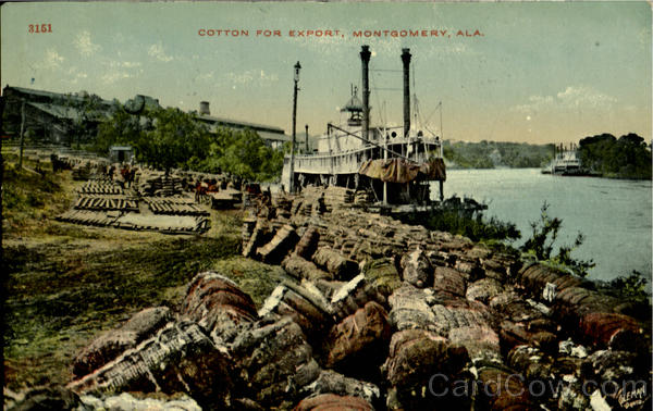 Cotton For Export Montgomery Alabama