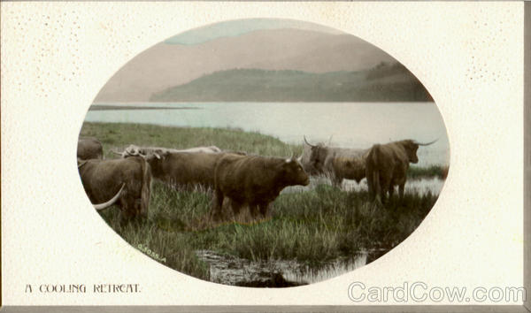 A Cooling Retreat Cows & Cattle