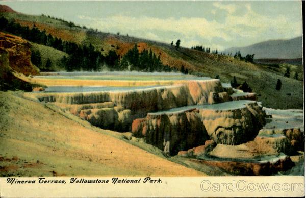 Minerva terrace yellowstone national park yellowstone for Minerva terrace yellowstone
