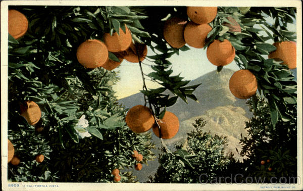 A California Vista Scenic Fruit