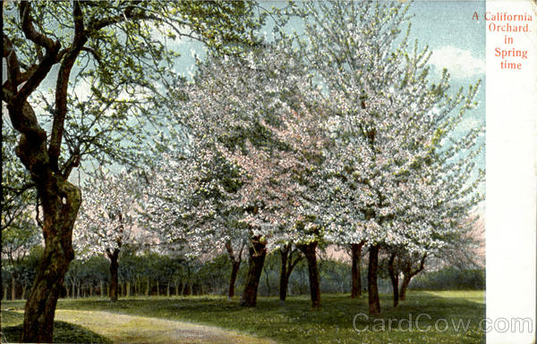 A California Orchard In Spring Time Flowers