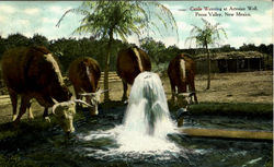 Cattle Watering At Artesian Well