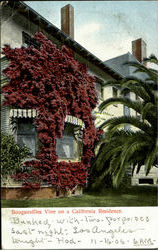 Bouganvillea Vine On A California Residence