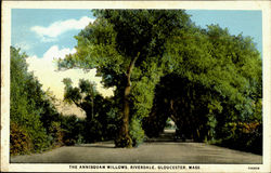 The Annisquam Willows, Riverdale