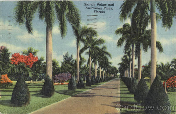 Stately Palms and Australian Pines Scenic Florida