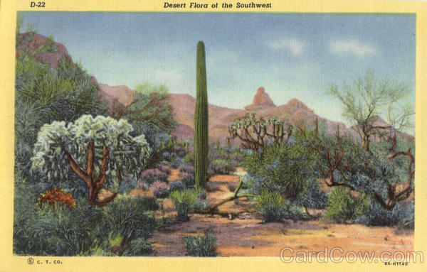 Desert Flora of the Southwest Cactus & Desert Plants