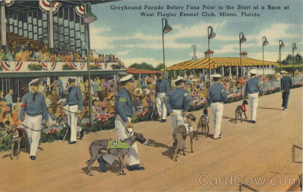 Greyhound Parade before Fans Prior to the Start of a Race, West Flagler Kennel Club Miami Florida