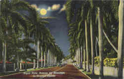 Royal Palm Avenue by Moonlight in Tropical Florida