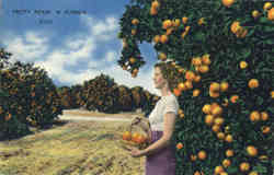Pretty Pickin In Florida Oranges