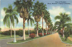 One of Florida's Many Beautiful Tropical Avenues