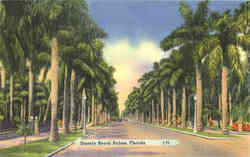 Stately Royal Palms