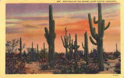 Sentinels of the Desert, Giant Cactus (Sahuaro)