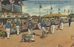 Greyhound Parade before Fans Prior to the Start of a Race, West Flagler Kennel Club