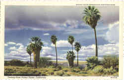 Twenty-Nine Palms Oasis