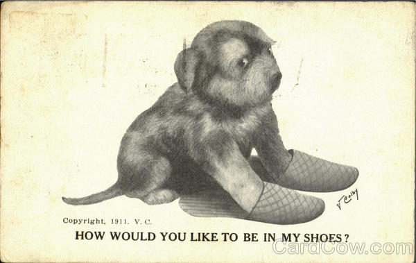 How Would You Like To Be In My Shoes? V. Colby Dogs