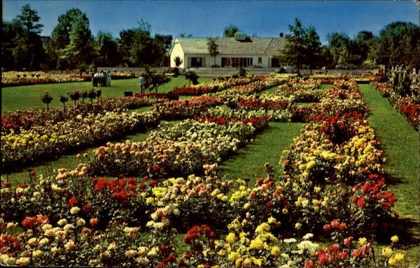 Jackson Amp Perkins Rose Garden Newark Ny