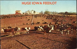 Huge Iowa Feedlot