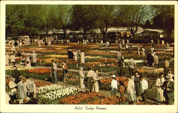 Nelis Tulip Farms Holland Michigan