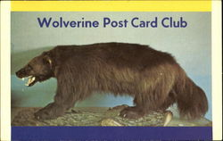 Wolverine Post Card Club
