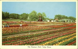 The Famous Nelis Tulip Farm