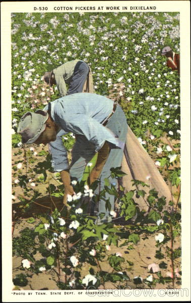 Cotton Pickers At Work In Dixieland Black Americana