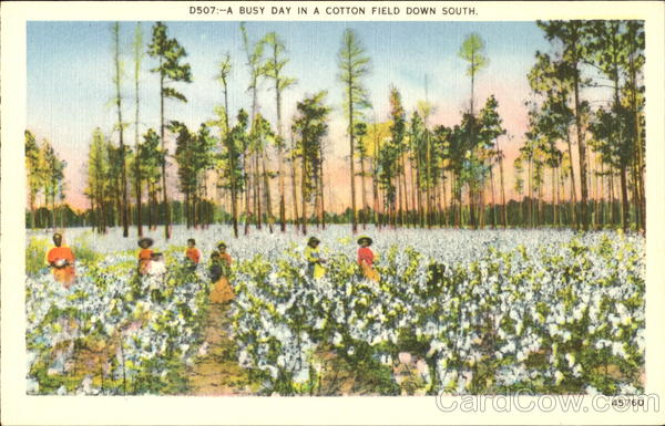 A Busy Day In A Cotton Field Down South Native Americana