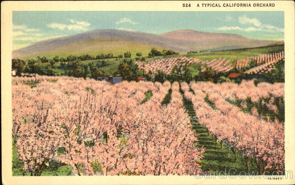 A Typical California Orchard Scenic