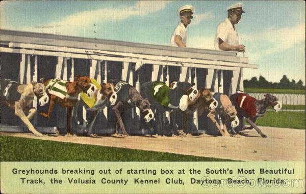Daytona Dog Track >> Greyhound Racing Volusia Kennel Club Daytona Beach Fl