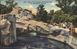 Seals, The Chicago Zoological Park Postcard