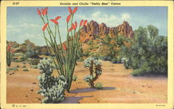 Ocotillo And Cholla Teddy Bear Cactus