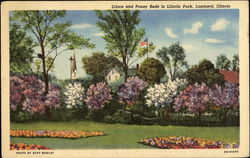 Lilacs And Pansy Beds In Lilacia Park