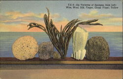 Six Varieties Of Sponges