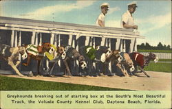 Greyhound Racing Volusia Kennel Club