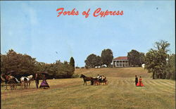 Forks Of Cypress