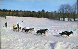 Championship Dog Sled Racing