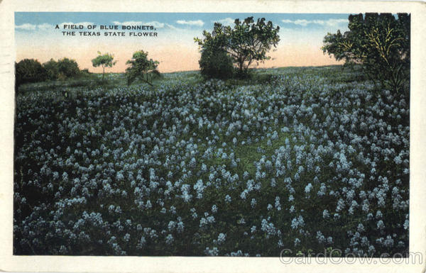 A Field of Blue Bonnets, The Texas State Flower Scenic