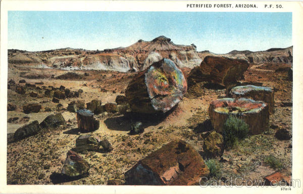 Petrified Forest Adamana Arizona