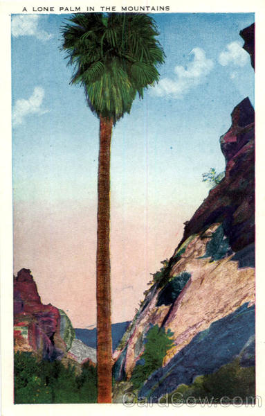 A Lone Palm in the Mountains Scenic Arizona