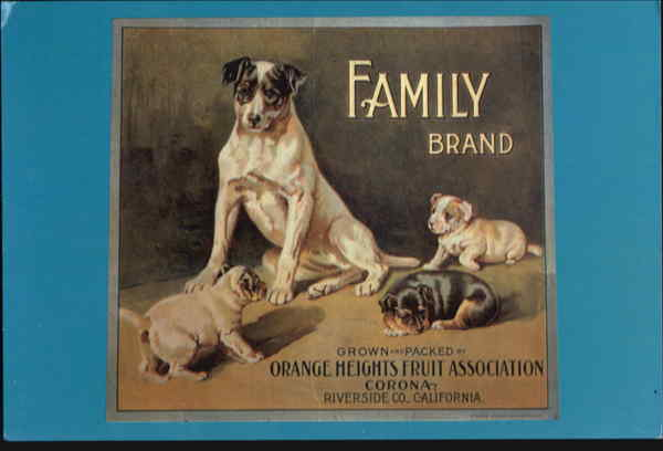 Family Brand Dogs